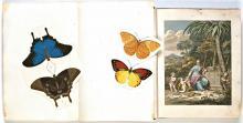 Pieter Cramer, De uitlandsche kapellen voorkomende in de drie waereld-deelen Asia, Africa en America (1779-1782)